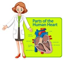 Doktor och affisch som visar delar av mänskligt hjärta vektor
