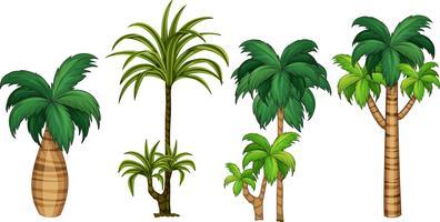 Satz unterschiedliche Palme vektor