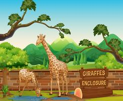 Zwei Giraffen im Zoo vektor