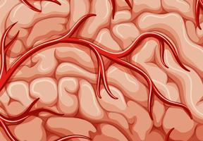 Eine Nahaufnahme der Adern des Gehirns