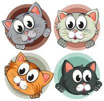 Vier Kätzchenköpfe auf rundem Abzeichen vektor