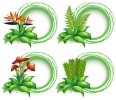 Gränsmallar med löv och blommor vektor