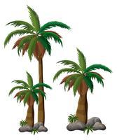 Palm på vit bakgrund