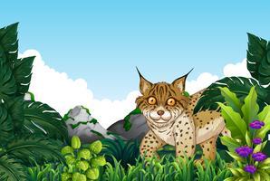 Lynx som bor i skogen
