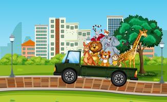 Många vilda djur på lastbilen