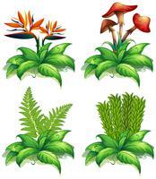Fyra olika typer av växter på vit bakgrund