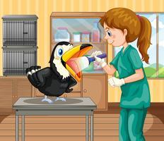 Ein Tierarzt Doktor, der einen Hornbill überprüft