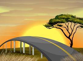 Bro över fältet vid solnedgången