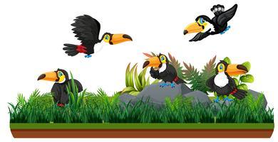 Toucan i isolerad natur vektor