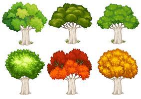 Eine Reihe von Baum vektor