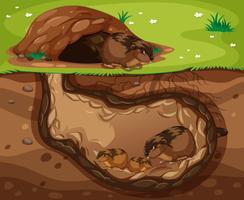 Meerschweinchenfamilie, die unter der Erde lebt