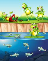 Frosch neben dem Teich vektor