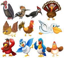 Fågelkollektioner vektor