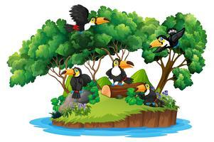 Isolerad natur ö med toucan vektor