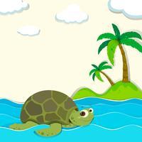 Sköldpadda som simmar i havet