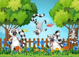 Fyra lemurer leker i trädgården vektor
