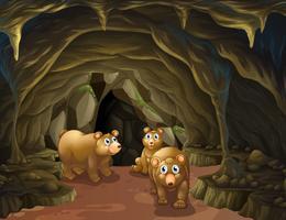 Björnfamilj som bor i grottan
