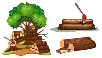 En uppsättning träd som klipps