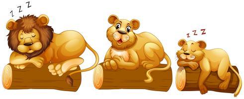 Lejonfamilj på loggen