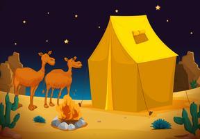 kameler och tält vektor