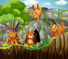 Fyra björnar som bor i grottan