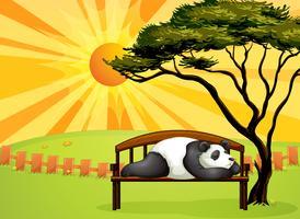 En björn som sover på en bänk