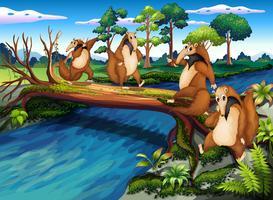 Vier spielerische Wildtiere, die den Fluss überqueren