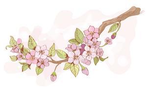 Sakura körsbärsaffär vektor