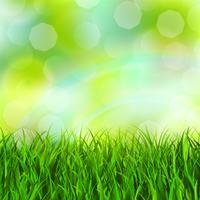 gräs bakgrund vektor
