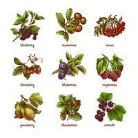 Sketch berries färgad uppsättning vektor