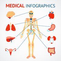 Mänskliga organer infografiska vektor