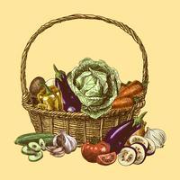 Gemüsefarbe skizzieren vektor