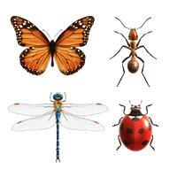 Insekter realistiska set vektor