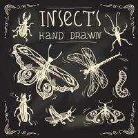 Insektenskizze eingestellt