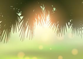 Palm tree lämnar mot bokeh ljus bakgrund
