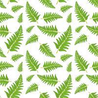 Fernblad sömlöst mönster vektor