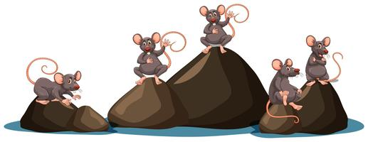Ein Satz Ratte auf weißem Hintergrund