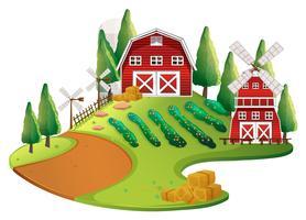 Gårdsplats med grödor och ladugård