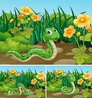 Tre scener med grön orm i trädgården