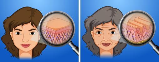 Kvinnlig yngre hud och åldrande hud