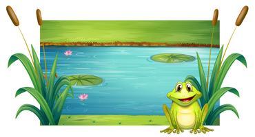 Grüner Frosch, der durch den Fluss sitzt