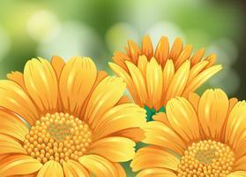 Gula blommor i trädgården