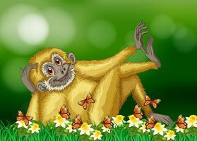 Gibbon med vit päls i skogen