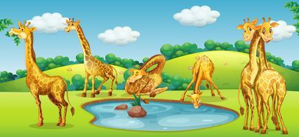 Glückliche Giraffe in der Natur