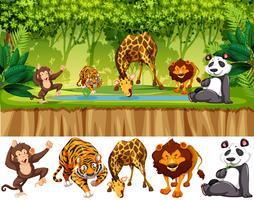 Vilt djur i djungeln