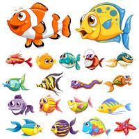 Olika typer av fisk vektor