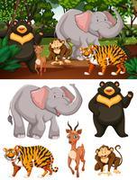 Vilda djur i skogen vektor