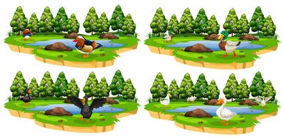 Set verschiedene Entenparks