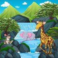 Scen med vilda djur vid vattenfallet