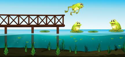 Drei Frösche im Teich